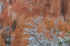 Bryce Canyon National Park, USA Royalty Free Stock Photography