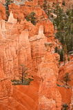 Bryce Canyon National Park, USA Royalty Free Stock Photography
