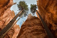 Bryce Canyon National Park, USA royalty free stock images