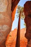 Bryce Canyon National Park, Utá Fotos de Stock
