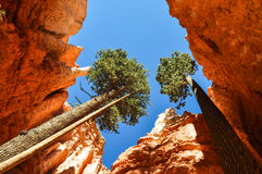 Bryce Canyon National Park, Utah Royalty-vrije Stock Fotografie