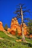 Bryce Canyon National Park, Utah, Etats-Unis Photo stock