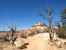 Bryce Canyon National Park Utah, Förenta staterna Royaltyfria Foton