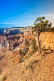 Bryce Canyon National Park in Utah in the Morning Royalty Free Stock Photo