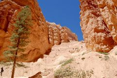 Bryce Canyon National Park Utah. Picture of Hoodoos at Bryce Canyon National Park in Utah Royalty Free Stock Photos