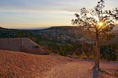 Bryce Canyon National Park Utah-Sonnenaufgangsommerfrühling mit kleinem Baum und Unglücksboten Lizenzfreies Stockbild