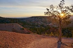 Bryce Canyon National Park Utah sunrise summer spring with small tree and hoodoos royalty free stock image