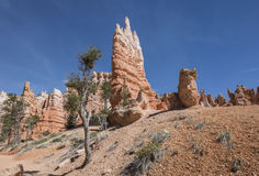 Bryce Canyon National Park, Utah, U Fotografia Stock Libera da Diritti