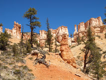 The Bryce Canyon National Park Utah, United States. Royalty Free Stock Photography