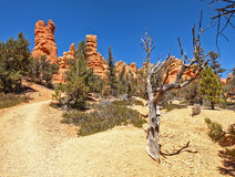 The Bryce Canyon National Park Utah, United States. Stock Images