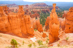 Bryce Canyon National Park, Utah, USA Arkivbild