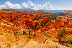 The Bryce Canyon National Park, Utah, USA. Bryce Canyon is a collection of natural amphitheaters aside of the Paunsaugunt Plateau. Bryce is distinctive due to Stock Photography