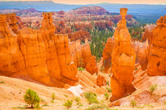 The Bryce Canyon National Park, Utah, USA Royalty Free Stock Photography