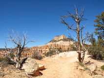 Bryce Canyon National Park Utah, Vereinigte Staaten lizenzfreie stockfotos
