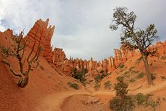 Bryce Canyon National Park, Utah, Verenigde Staten Stock Foto's