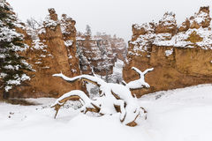 Bryce Canyon National Park Winter Snow Cover Royalty Free Stock Photos