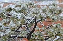 Bryce Canyon National Park in winter, Utah. Bryce Canyon National Park, Utah, USA Stock Photos