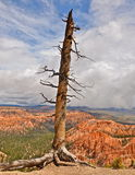 Bryce Canyon National Park in winter, Utah. Bryce Canyon National Park, Utah, USA Royalty Free Stock Photography