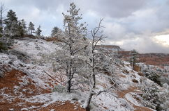 Bryce Canyon National Park in winter, Utah Royalty Free Stock Photos