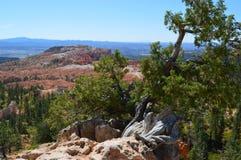 Bryce Canyon Natl Park Immagini Stock Libere da Diritti