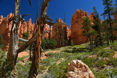 Bryce Canyon Natl Park Immagine Stock