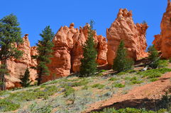 Bryce Canyon Natl Park Fotografia Stock
