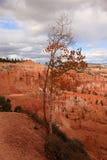 Autumn in Bryce Canyon National Park Stock Photos