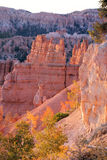Bryce Canyon Overlook. This is a typical view of the incredible rock formations that can be seen in and around Bryce Canyon. One of the most beautiful places on Stock Images