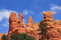 Bryce Canyon Red Canyon Utah Royalty Free Stock Images