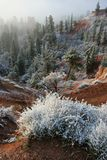 Bryce Canyon Snow. Bryce Canyon morning after a light snow Stock Photo