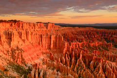 Bryce Canyon Sunrise glow. Royalty Free Stock Photography