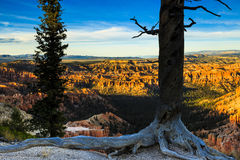 Bryce Canyon at Sunset Royalty Free Stock Photography