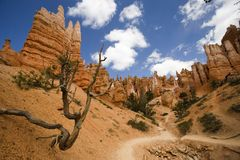 Bryce Canyon Trail Stock Image