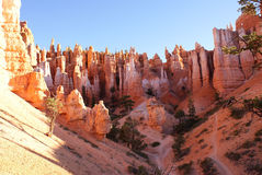 Bryce Canyon Trails. View looking up from one of the trails in Bryce Canyon. One of the wonders of the world stock images