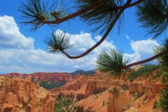 Bryce Canyon through the trees. Stunning orange layers of Bryce Canyon viewed through the frame of tree branches Royalty Free Stock Photo