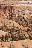 Bryce Canyon in Utah Royalty Free Stock Photo