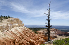 Bryce Canyon in Utah Royalty Free Stock Photography