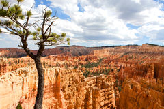 Bryce Canyon Utah Amphitheater. Scenic vista of the Amphitheater in Bryce Canyon National Park located in Utah, USA Royalty Free Stock Images