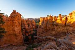 Bryce Canyon, Utah, perspectieflandschap in de herfst bij zonsopgang Royalty-vrije Stock Foto