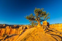 Bryce Canyon Utah, perspektivlandskap i höst på soluppgång Arkivbilder