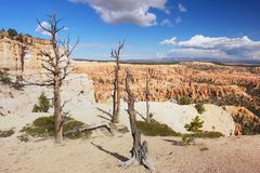 Bryce Canyon, Utah. View of dry trees in Bryce Canyon, Utah Royalty Free Stock Photo