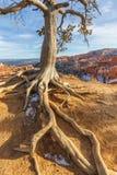 Bryce Canyon Utah Winter Landscape Arkivbild