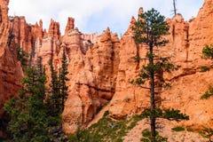 Bryce Canyon View royaltyfria foton