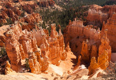 Bryce Canyon Vista Royalty Free Stock Image