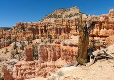 Bryce Canyon-Wanderung Stockfoto