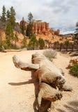 Bryce Canyon-weg Royalty-vrije Stock Foto's