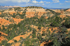 Bryce Canyon wilderness Stock Photography