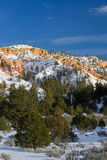 Bryce Canyon in the winter Stock Images