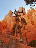 bryce kanion Utah Zdjęcia Royalty Free