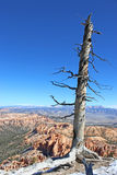 bryce kanion Utah Zdjęcie Royalty Free